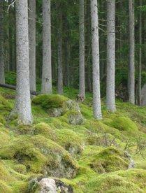 rce-skogen2